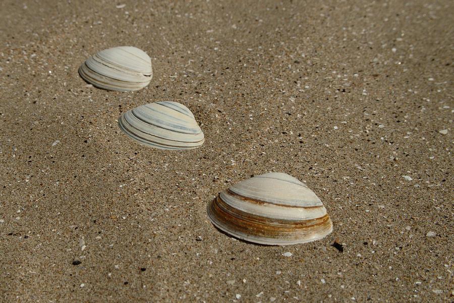 Three Shells West Sands by Adrian Wale