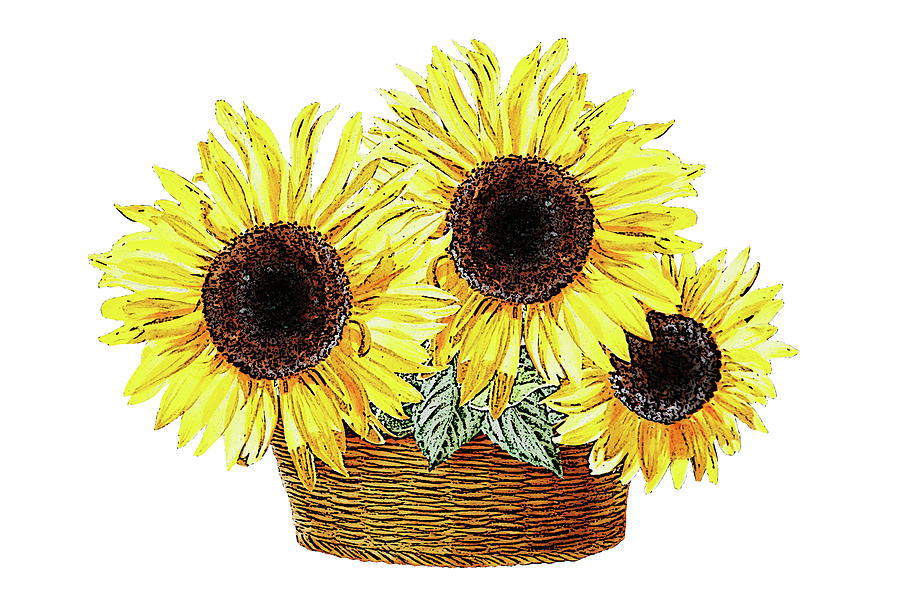 Three Sunflowers In The Basket Painting
