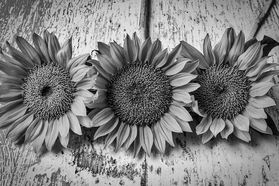 three sunflowers still life in black and white photograph by garry gay rh pixels com black and white 2 download black and white 2 auf windows 10 spielen