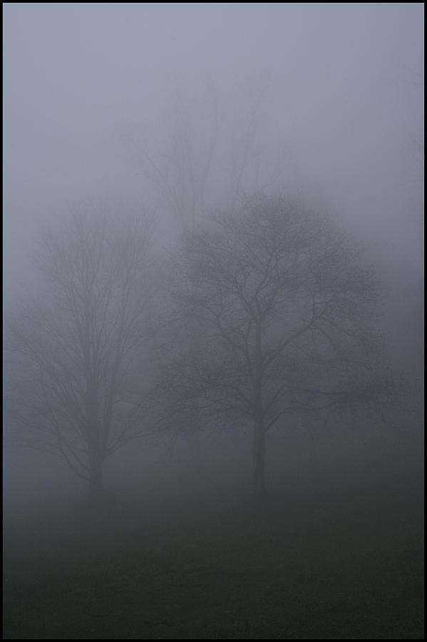 Landscape Photograph - Three Trees In Fog Mount Dandenong by Werner Hammerstingl