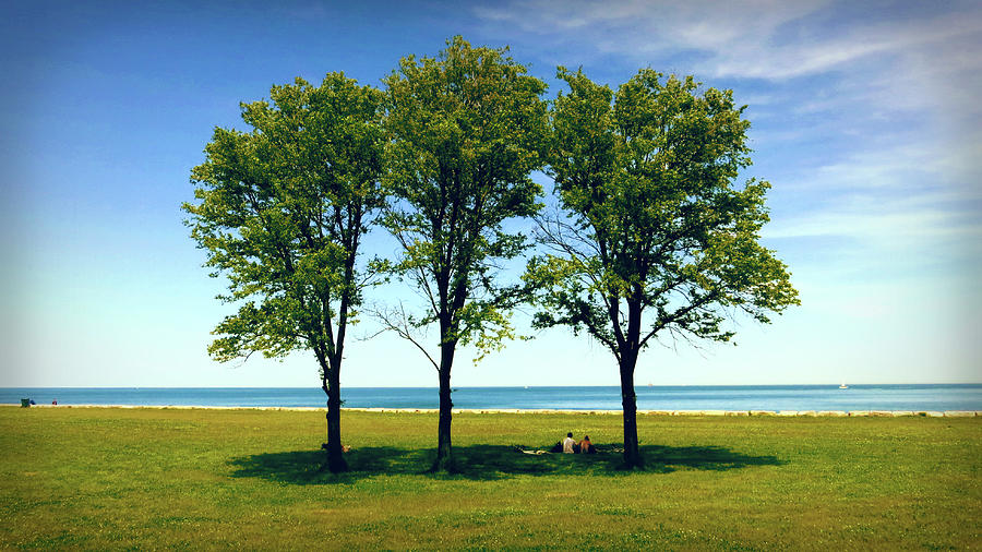 Three Trees Lake Shore by Patrick Malon