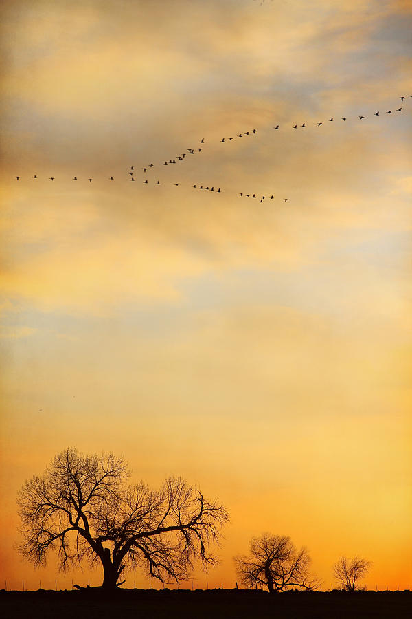 Portrait Photograph - Three Trees Peace And Harmony Birds In V by James BO Insogna