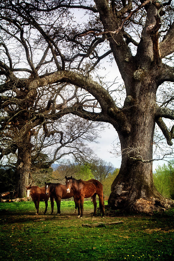 Three Under A Tree Photograph by Greg Mimbs