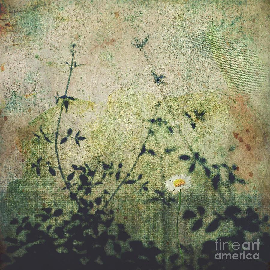 Daisy Photograph - Thrive by Karen Black