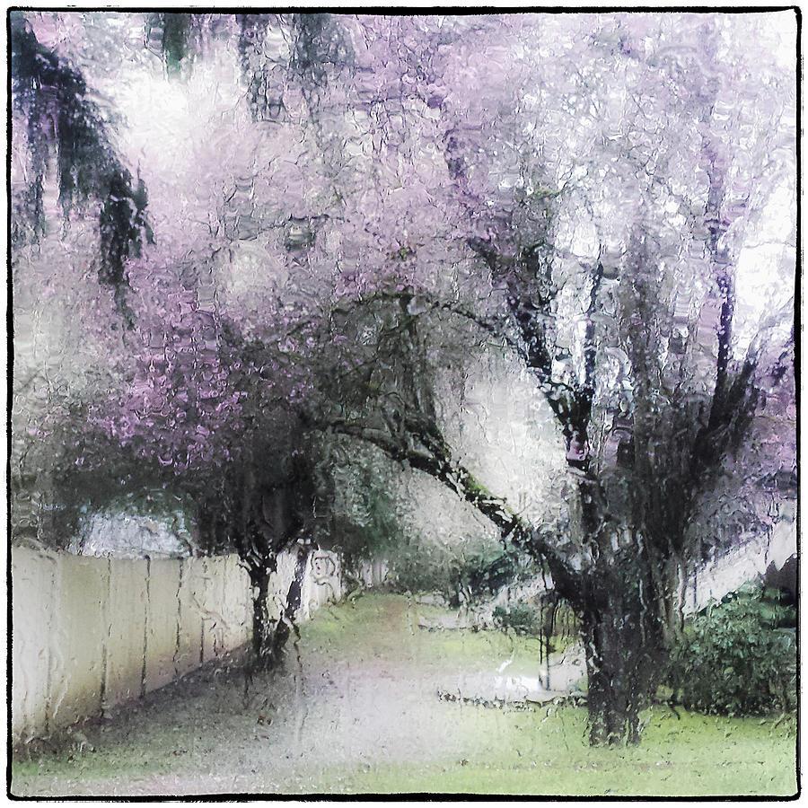 Through my Window by Lynn Wohlers