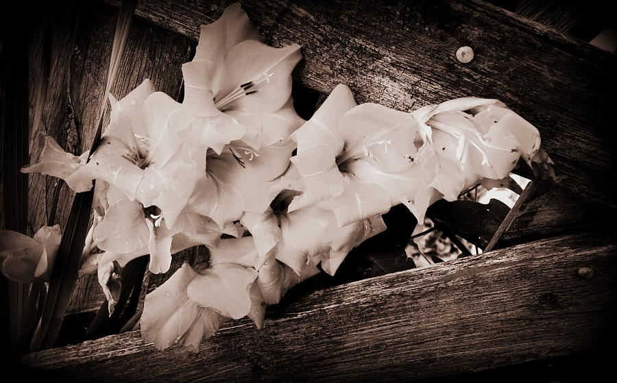 Flowers Photograph - Through The Fence by Diane Reed