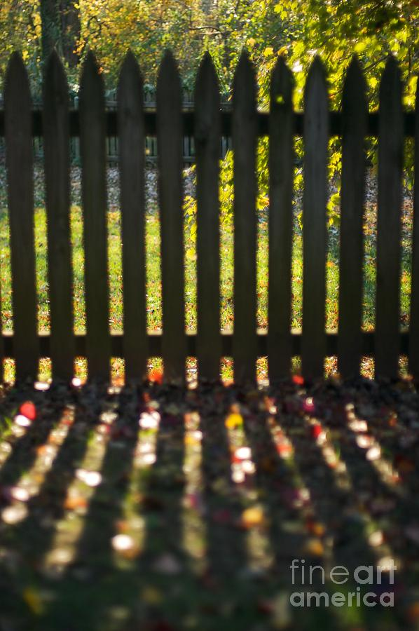Fence Photograph - Through The Fence by Hideaki Sakurai