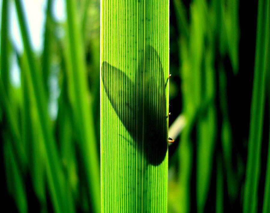 Moth Photograph - Through The Grass by Jane Buck