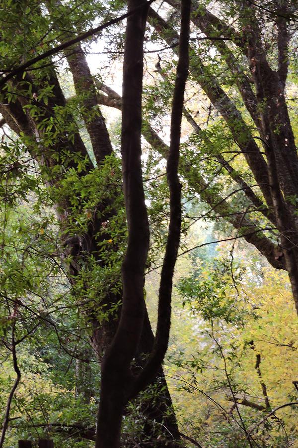 Through The Trees Photograph