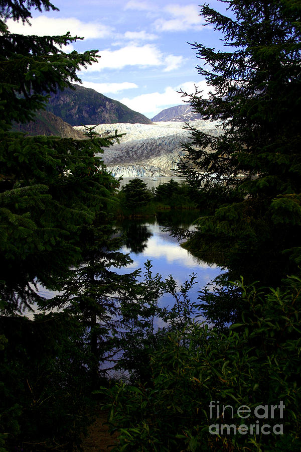 Mendenhall Glacier Photograph - Through The Trees by Valerie Fuqua