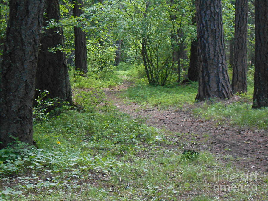 Forest Photograph - Through The Woods by LKB Art and Photography