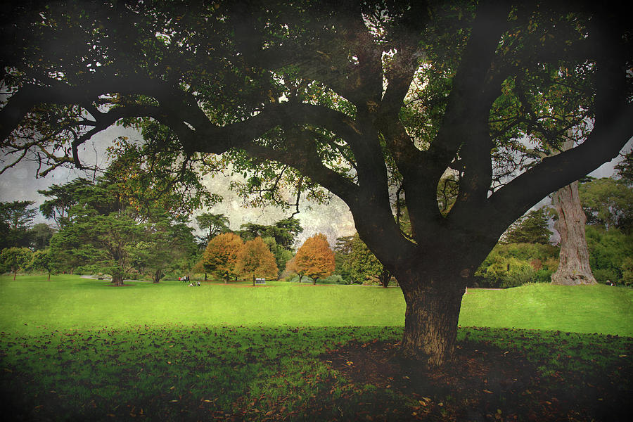 Trees Photograph - Throw Your Arms Around The World by Laurie Search