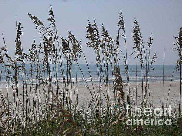 Thru The Sea Oats Photograph by Barb Montanye Meseroll