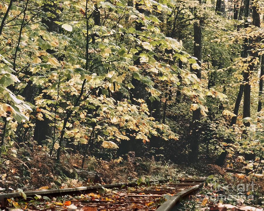Thru The Woods Photograph
