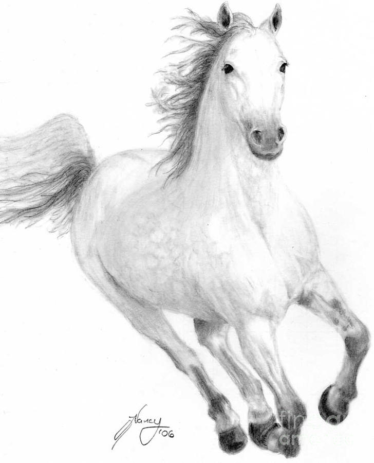 Horses Drawing - Thundering Hooves by Nancy Aldrich