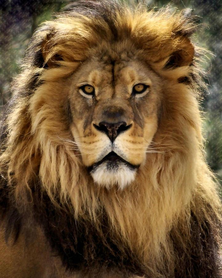 Thy Kingdom Come Photograph