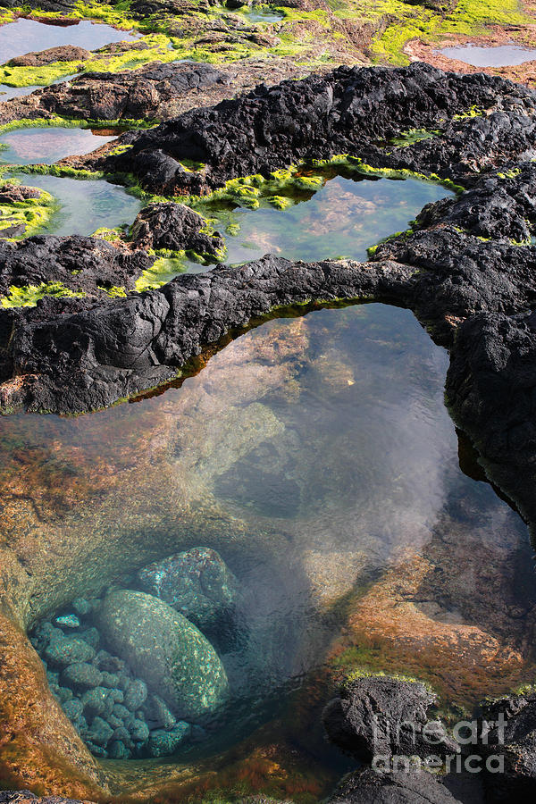 Shore Photograph - Tidal Pool by Gaspar Avila