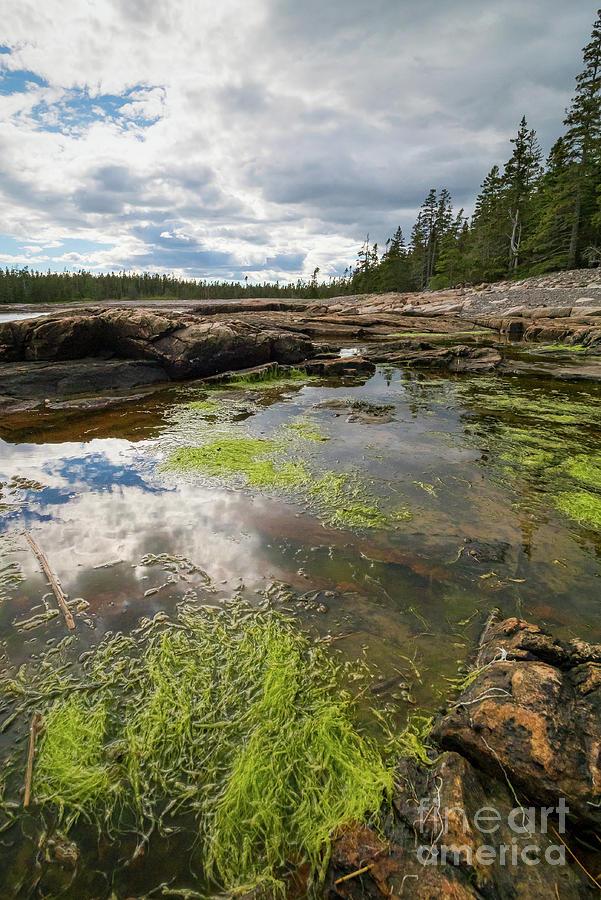 Tidal Pool, Southwest Harbor, Maine  #30023 by John Bald
