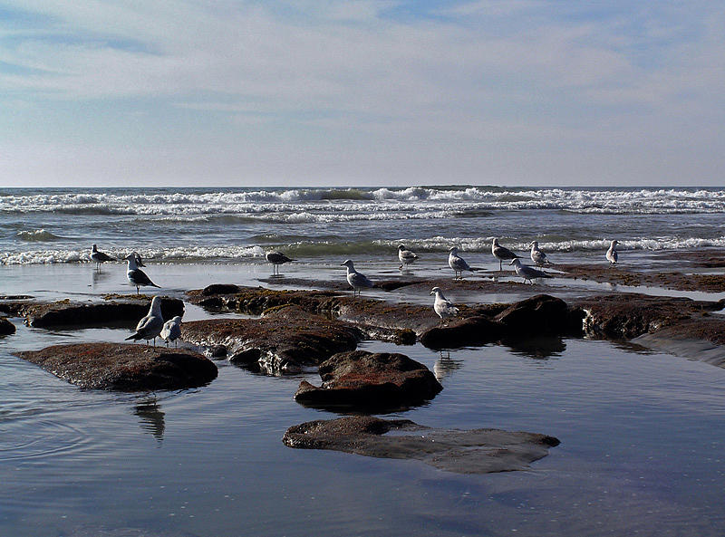 Tide Pool At Low Tide Photograph by Chuck Cannova
