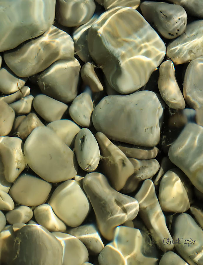 Still Life Photograph - Tide Pool by Chuck Kugler