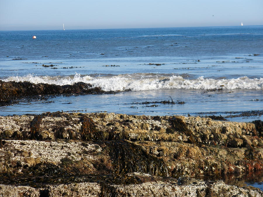 Beach Photograph - Tide Pools by Siobhan Yost