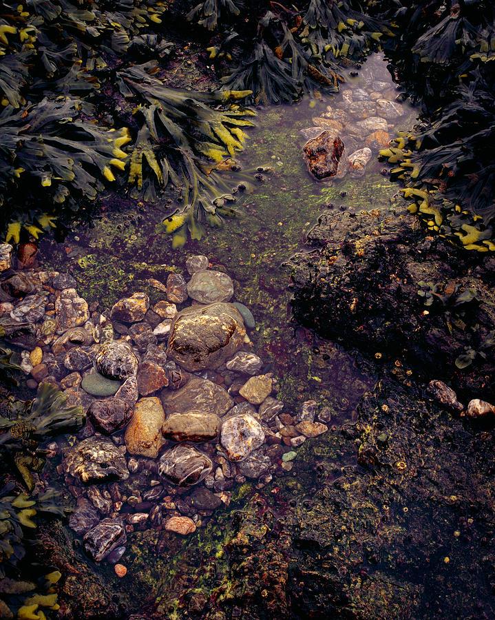 Tide Pool Photograph - Tidepool Detail by Rakesh Malik
