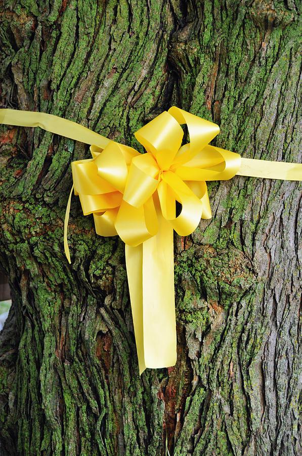 Yellow Ribbon Photograph - Tie A Yellow Ribbon by Lyle  Huisken