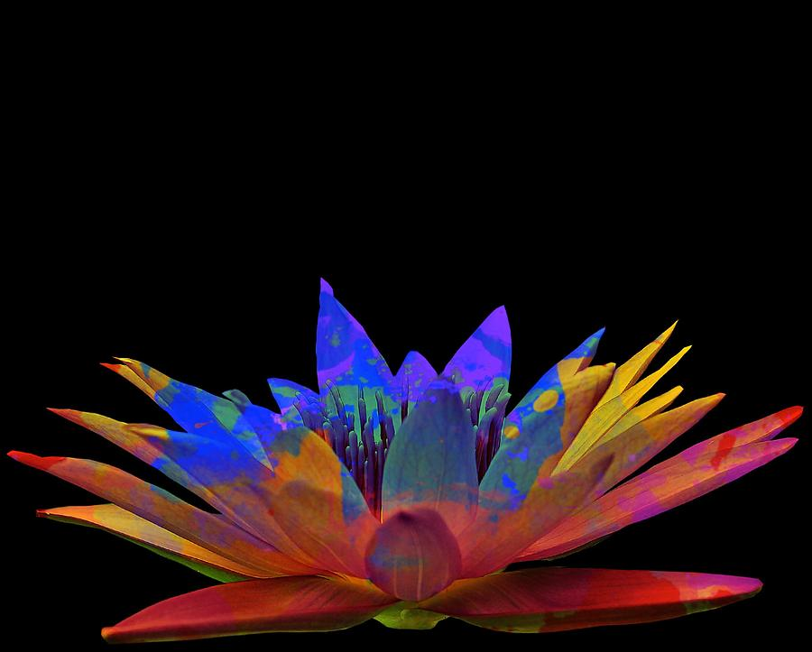 Tie Dye Lotus by Matty Archer
