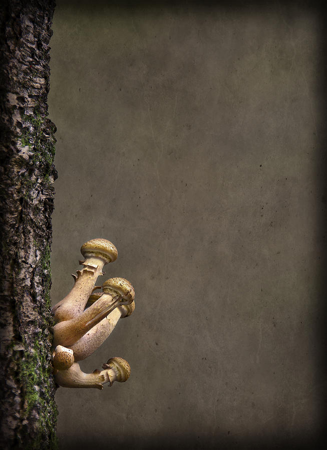 Fungi Photograph - Ties That Bind by Evelina Kremsdorf