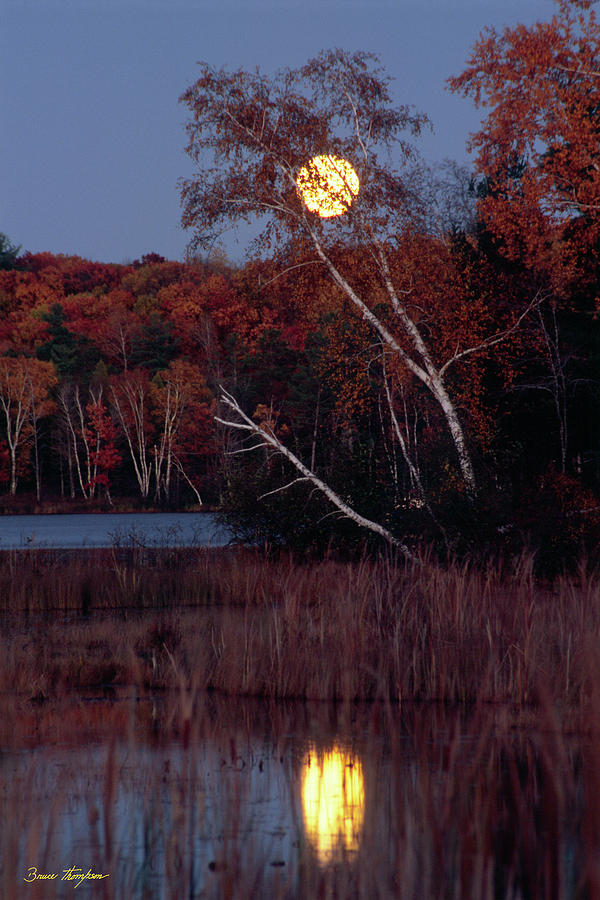 Moon Photograph - Tiger Cat Moonrise by Bruce Thompson