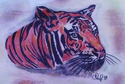 Tiger Drawing - Tiger by Cheryl Shibley