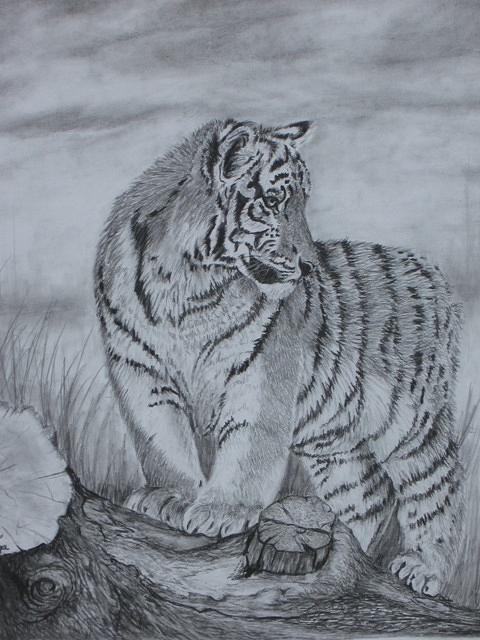 Tiger Drawing - Tiger Cub 1 by Sheila Banga