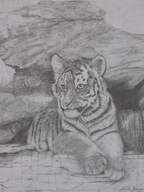 Tiger Drawing - Tiger Cub 2 by Sheila Banga