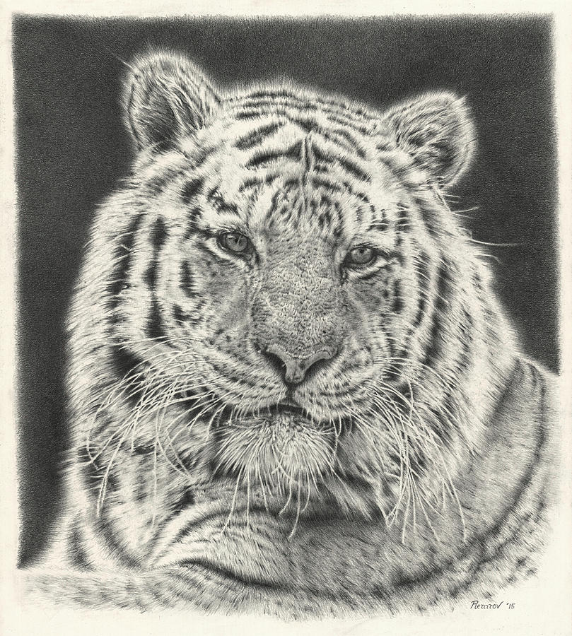 Tiger Drawing - Tiger Drawing by Remrov