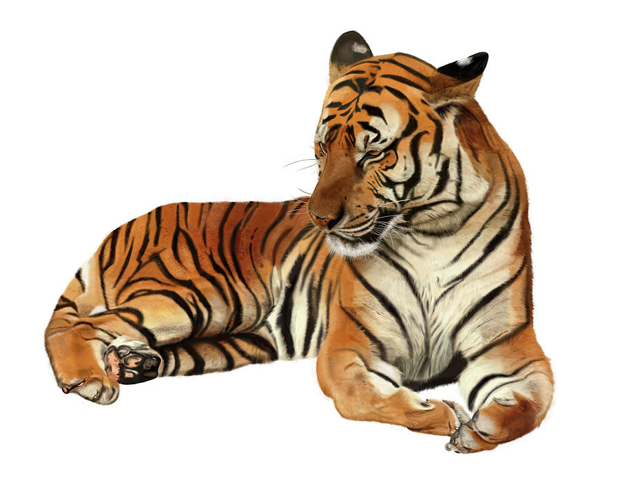 Tiger Digital Art - Tiger In Repose by Nigel Follett