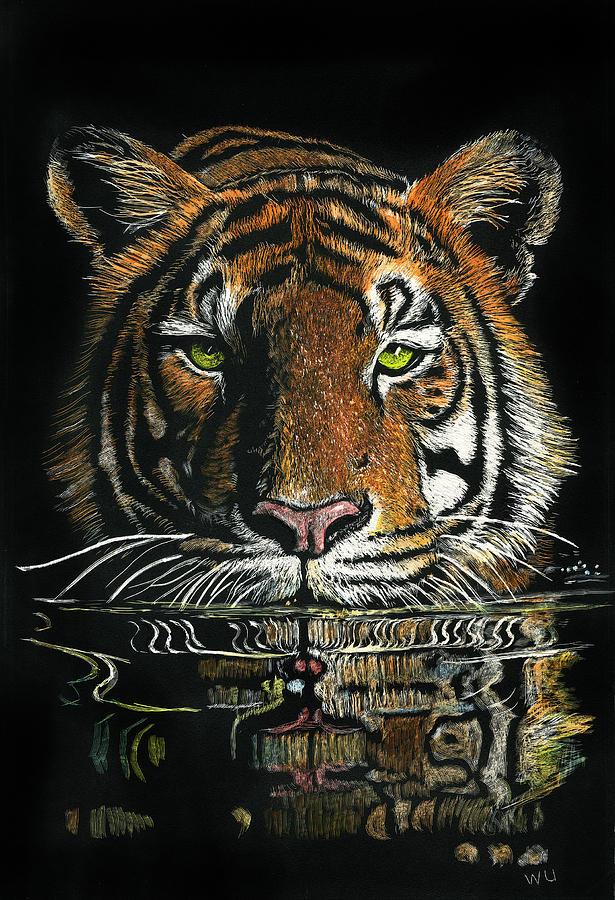 Tiger in Water by William Underwood