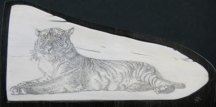 Scrimshaw Mixed Media - Tiger by Jim Stevens