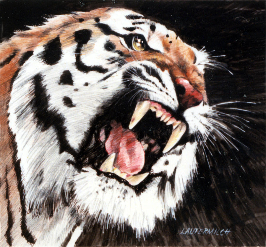 Tiger Roaring Painting - Tiger by John Lautermilch