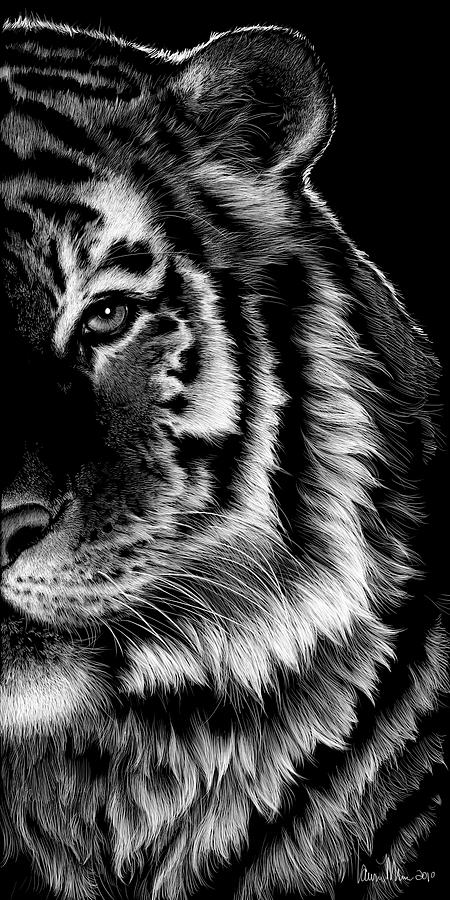 Tiger Drawing - Amur by Laurie Musser