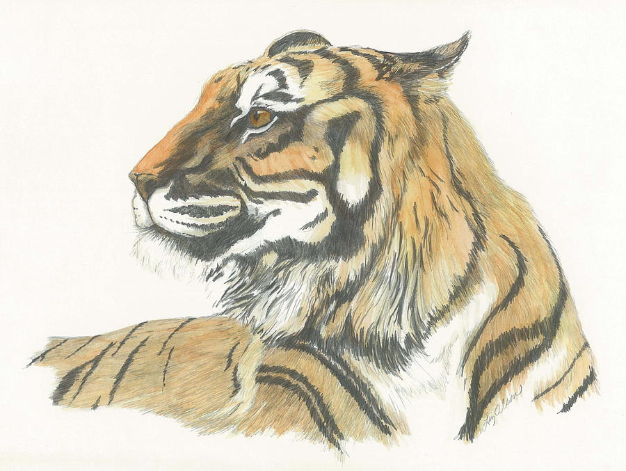 Tiger Painting - Tiger by Liz Rose