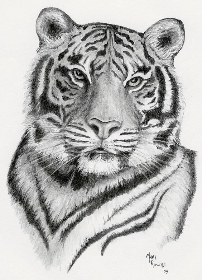 Tiger Drawing - Tiger by Mary Rogers