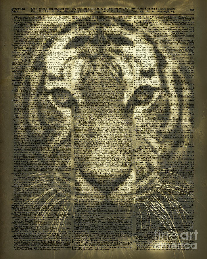 Tiger Photograph - Tiger Over Dictionary Page by Anna W