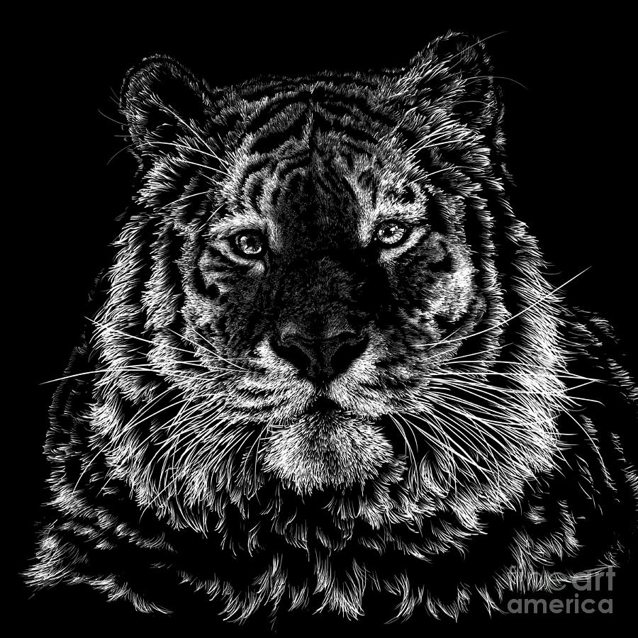 Tiger Drawing - Tiger Portrait by Laurie Musser