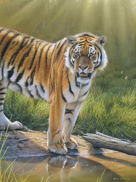 Tiger Painting - Tiger Royal Chitwan Nepal. by Eric Wilson