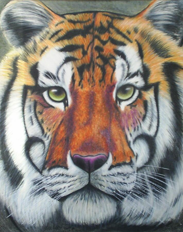 Tiger Drawing - Tiger by Scarlett Royal