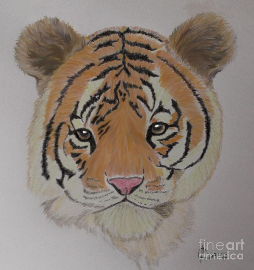 Tiger Mixed Media - Tiger Tiger by Cynthia Adams