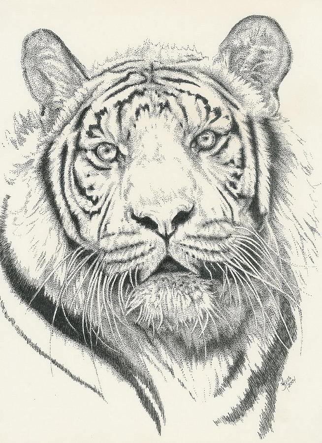 Tiger Drawing - Tigerlily by Barbara Keith