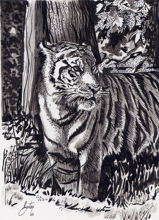 Tiger's Attention by Daniela Easter
