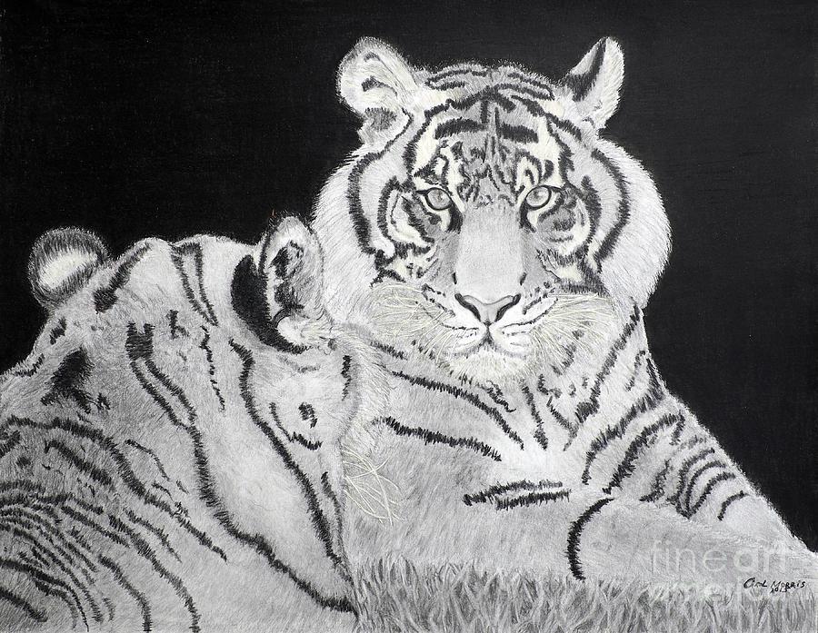 Tigers by Carol Morris