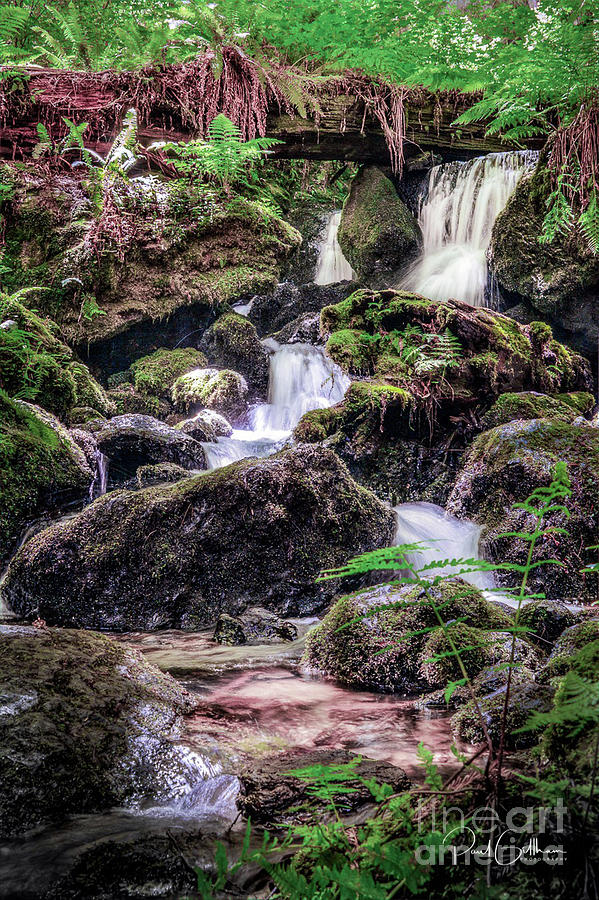 Orick Photograph - Tillium Falls by Paul Gillham